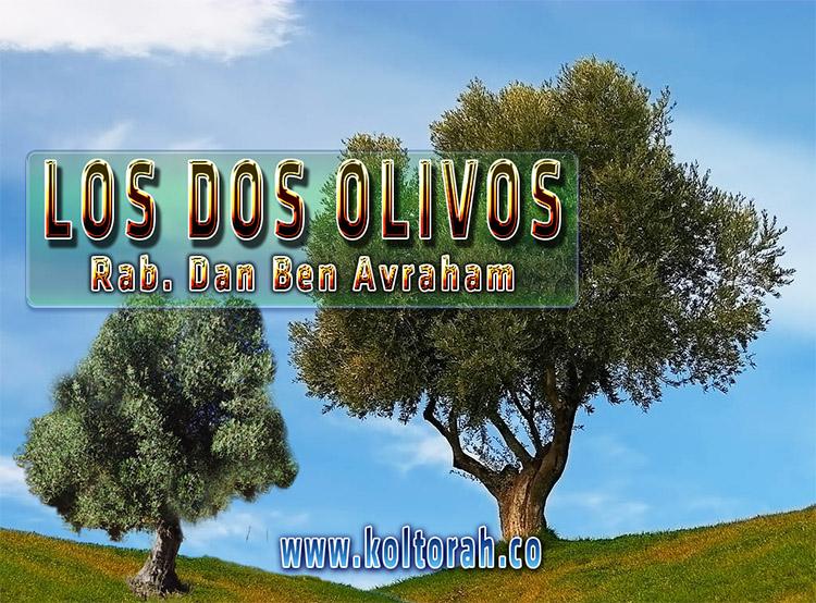 """Conferencia """"El misterio de los dos olivos"""" – Dr. Dan Ben Avraham"""