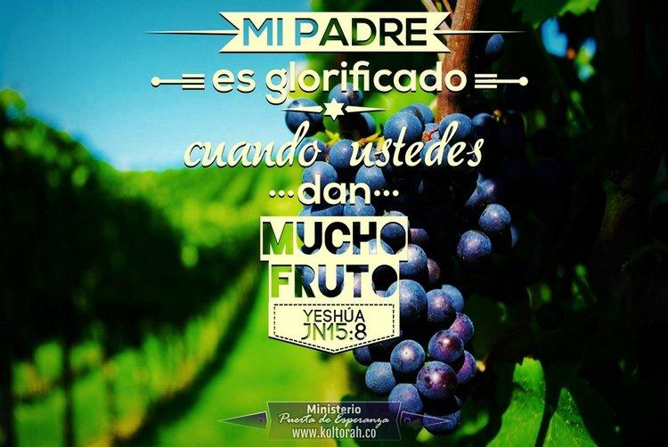 MuchoFruto_750
