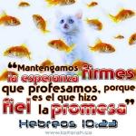 Heb10:23